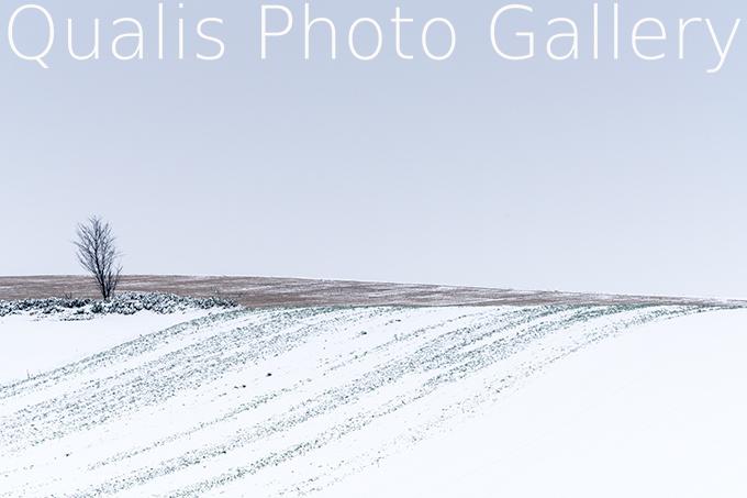 DSC01361-7.jpg
