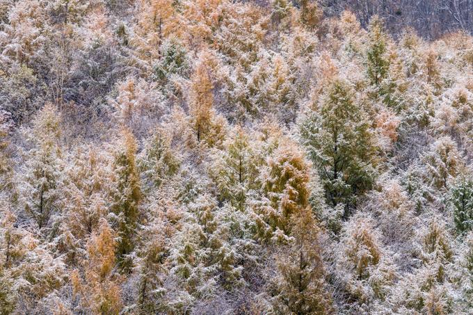 秋色が冬色に変わった日-11.jpg